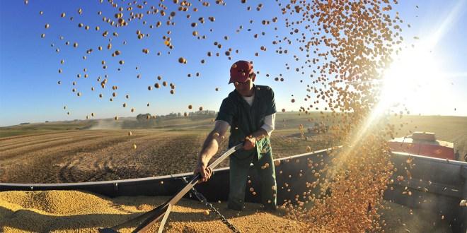 Produção de soja deve passar de 19,7 milhões para 20,4 milhões de toneladas no PR